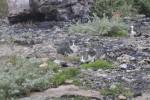 Yassıada iskele