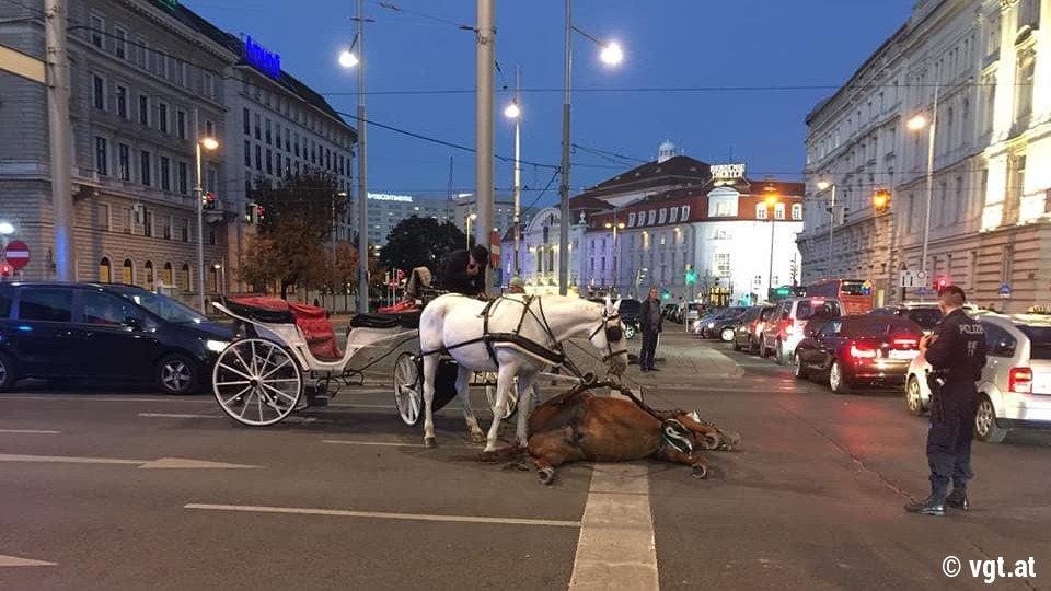 Viyana faytonları!